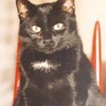 Blacky, die Katze meiner Kindheit.