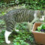 Meine erste Katze Johnston.