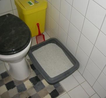 Katzenklo neben Toilette