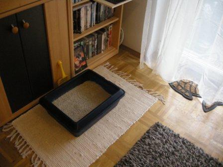 Katzenklo im Wohnzimmer