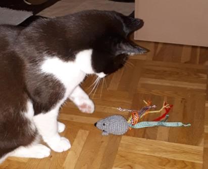 Katze mit Knistermaus