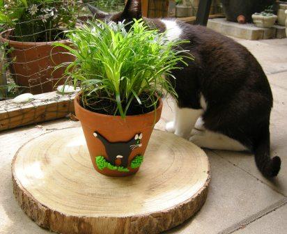 Katzen-Übertopf mit Katzengras und Katze