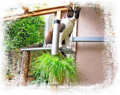Slimmy mit Katzengras