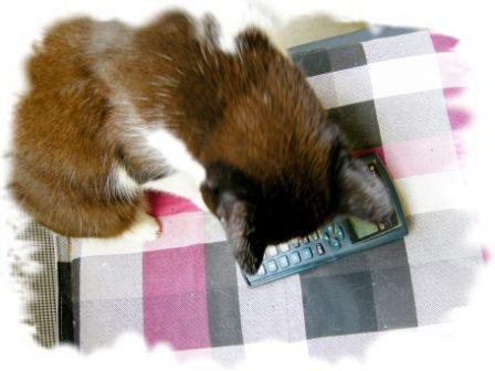 Katze mit Taschenrechner hilft bei der Berechnung der Trockenmasse (;