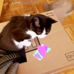 XXL-Schachtel mit Gucklöchern als Katzenspielzeug