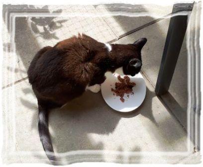 Fressverhalten von Katzen