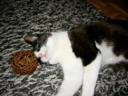 Katzenminzeball