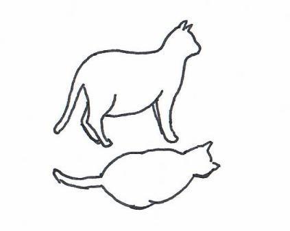 übergewichtige Katze