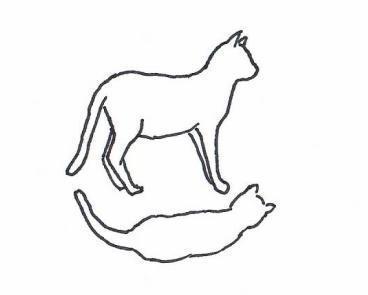 normalgewichtige Katze